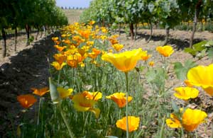vineyard flowers